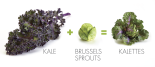 Kale-Brussels-Sprouts-Kalettes-620x271